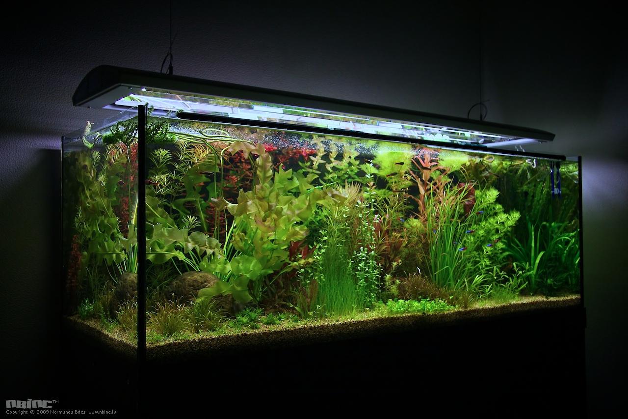 Освещение аквариума своими руками: подбор ламп и расчет 62